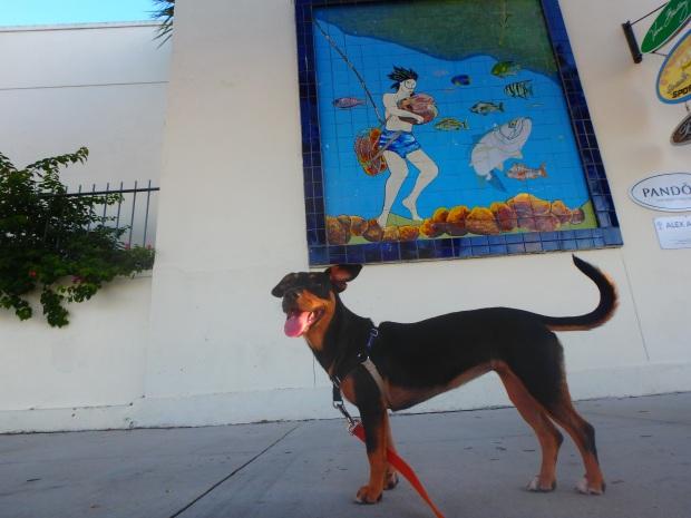 Frances loves a good sponge-diving mural.